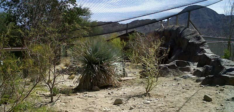 Living Desert Zoo Jaguar Enclosure
